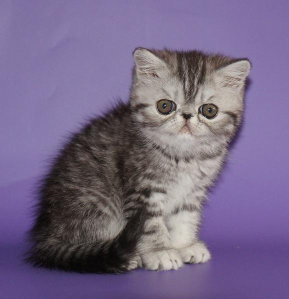 аллергия на кошек на руках